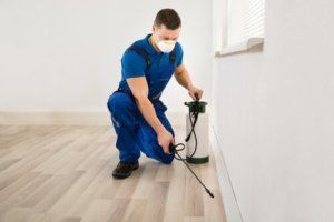 pests lurking in your home